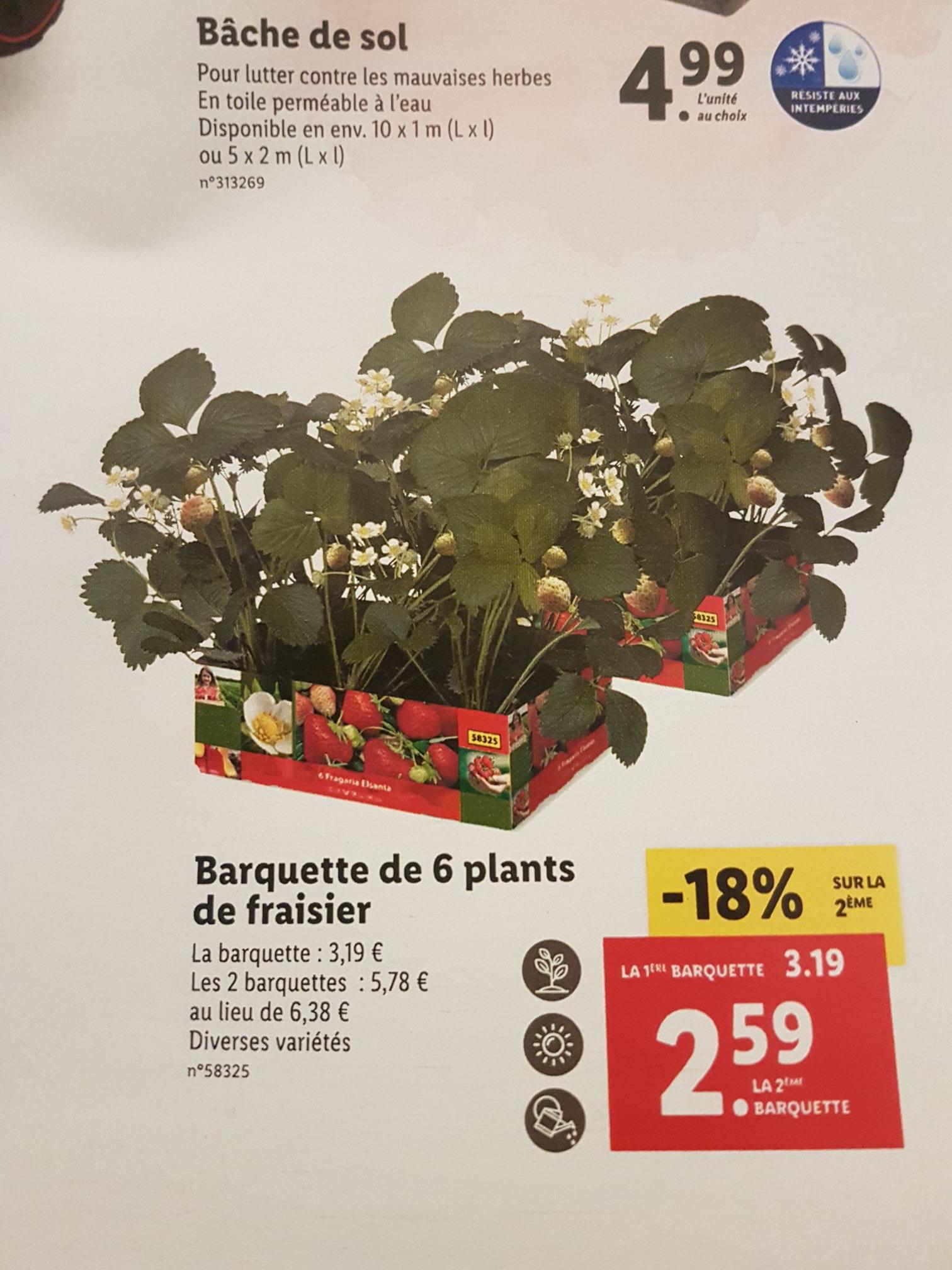 Lot de 2 barquettes de 6 plants de fraisiers - Plusieurs variétés