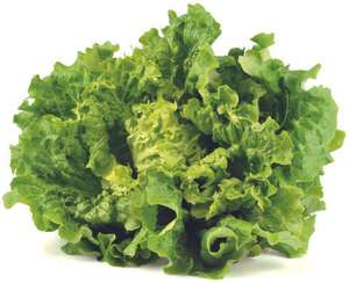 Salade Batavia - Origine France