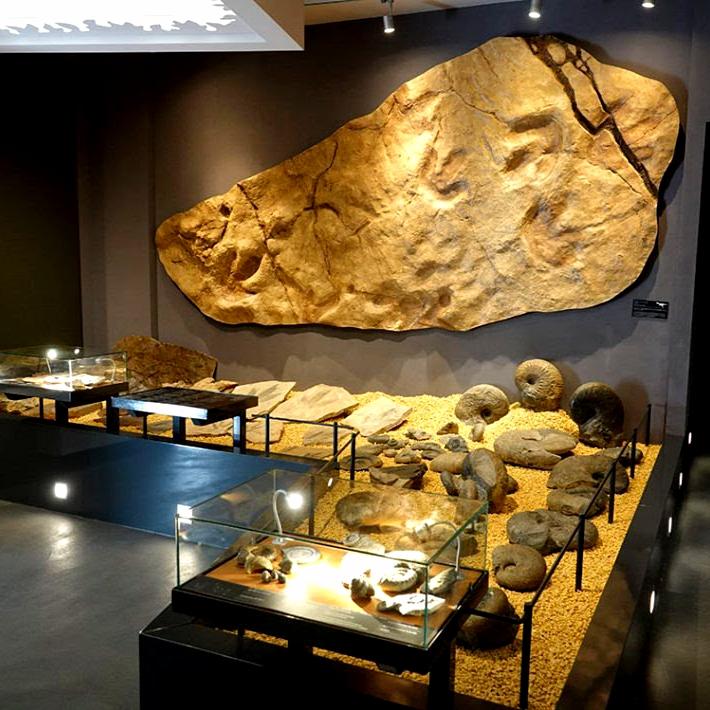 Entrée Gratuite au Musée de Millau & des Grands Causses (12)