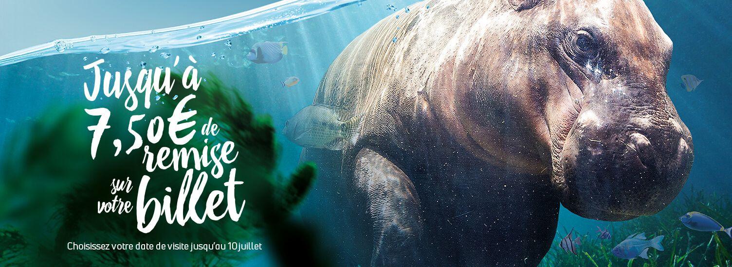 Sélection de billets datés pour le ZooParc de Beauval en promotion - Saint-Aignan (41)