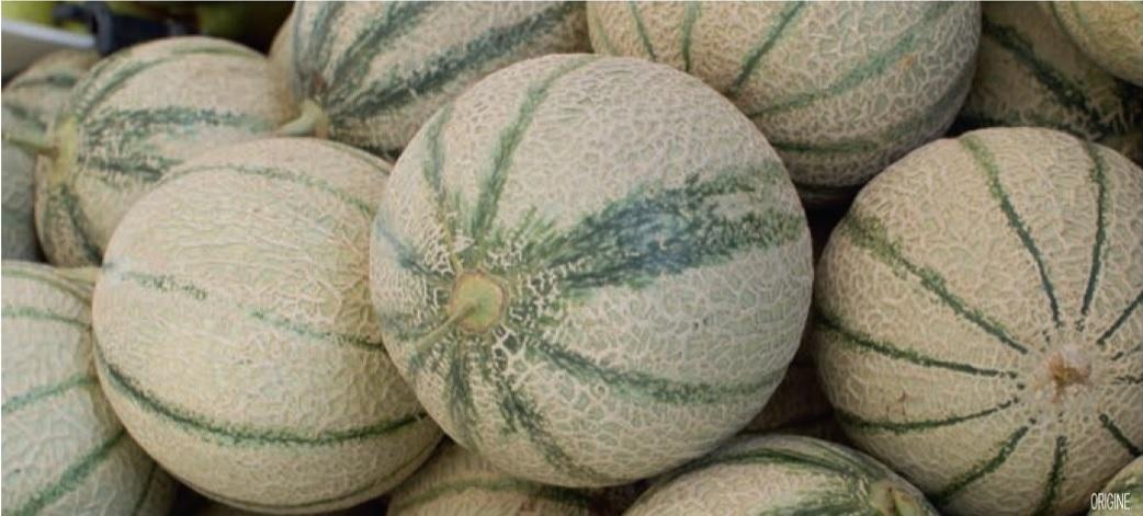 Lot de 3 melons