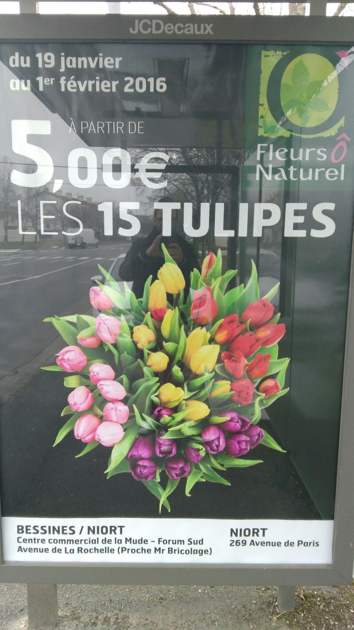 Les 15 Tulipes
