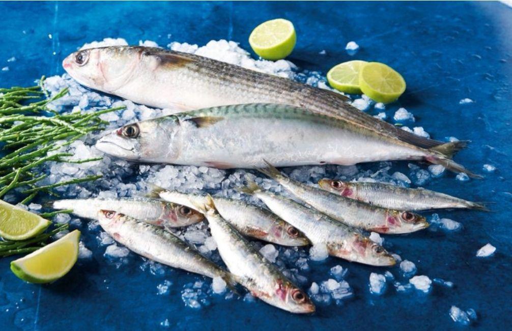 1 Kilo de Sardines ou maquereaux