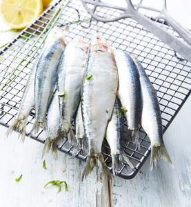 Sardines de Pêche française - Le Kg, Pêchées en Atlantique Nord-Est