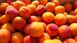 Caisse d'Abricots (Origine France) - 5 Kg