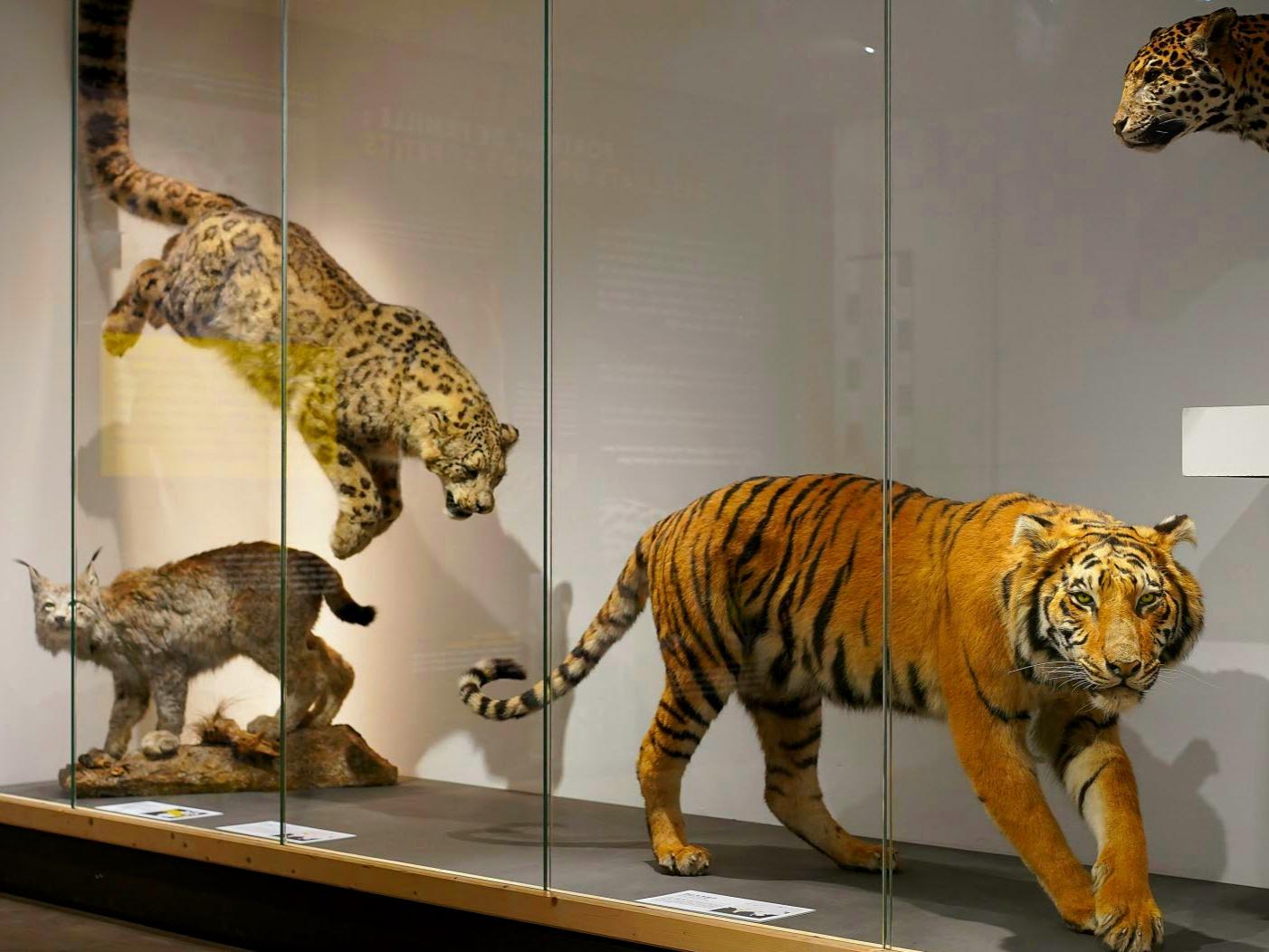 Entrée Gratuite au Muséum de Grenoble & au Musée de Grenoble (38)
