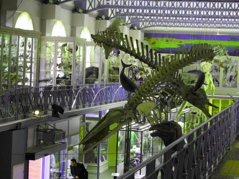 Entrée Gratuite au Musée d'Histoire Naturelle de Lille (59) - reservations.Lille.fr