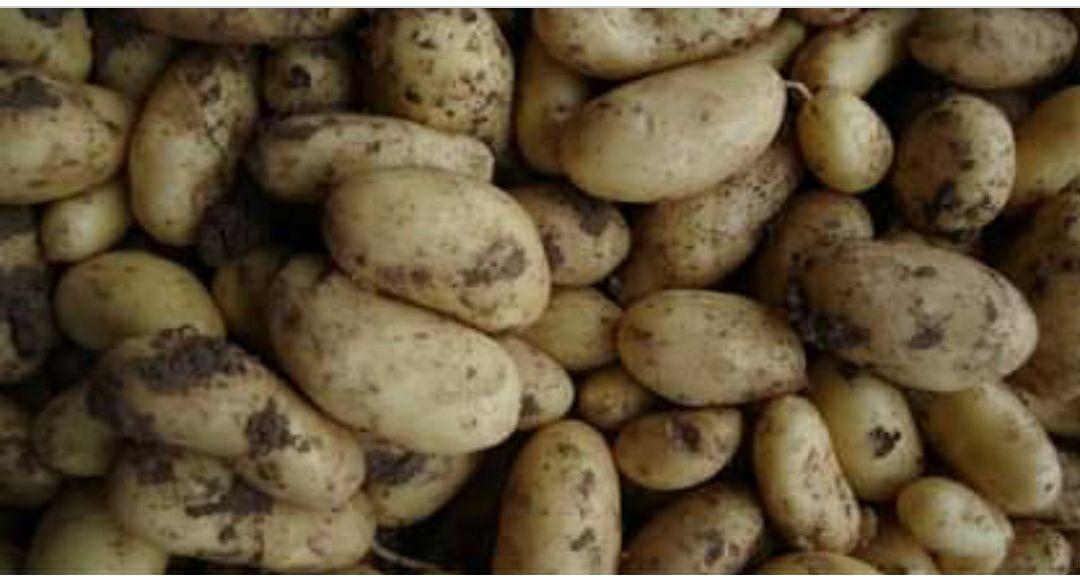 Légumes à ramasser : 3 kg de pommes de terre offerts dès 5€ de légumes du potager achetés - Cueillette du plessis Chanteloup en Brie (77)