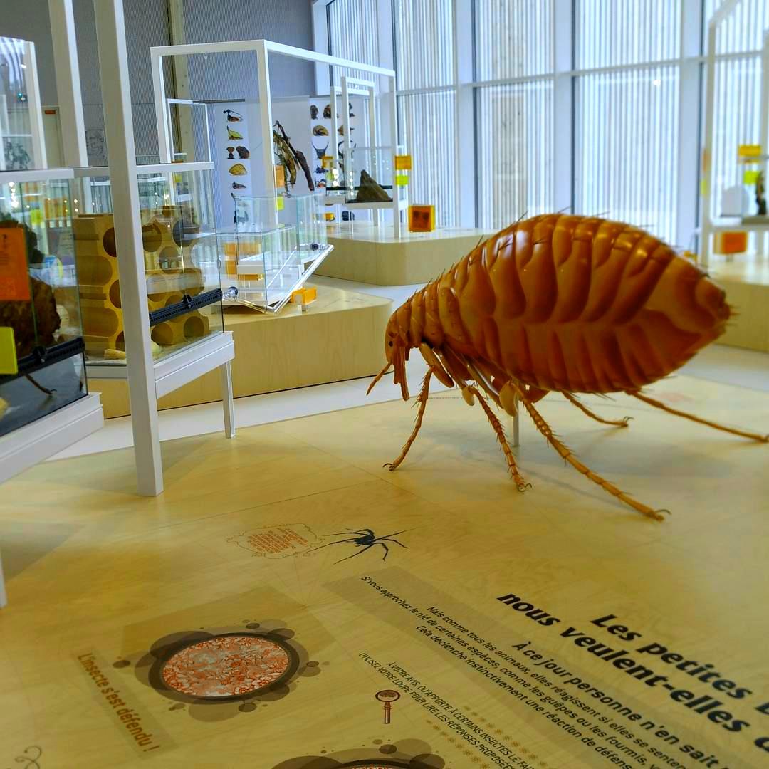 Entrée Gratuite à la Maison des Insectes du Parc du Peuple de l'Herbe - Carrières-sous-Poissy (78)