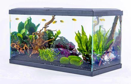 Aquarium Confort Inwa - Gris, 48L, LED, filtre, chauffage et produits inclus