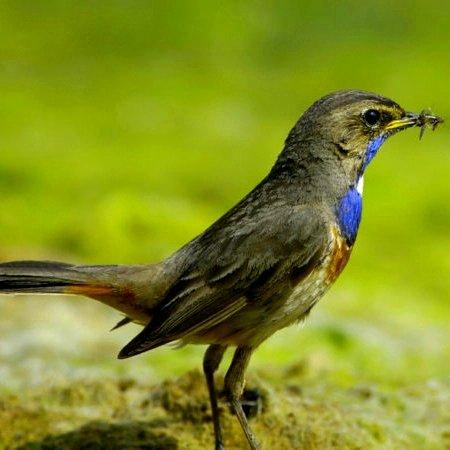 """Entrée Gratuite au Parc Ornithologique & à la Réserve Naturelle """"Terres d'Oiseaux"""" - Braud-et-Saint-Louis (33)"""