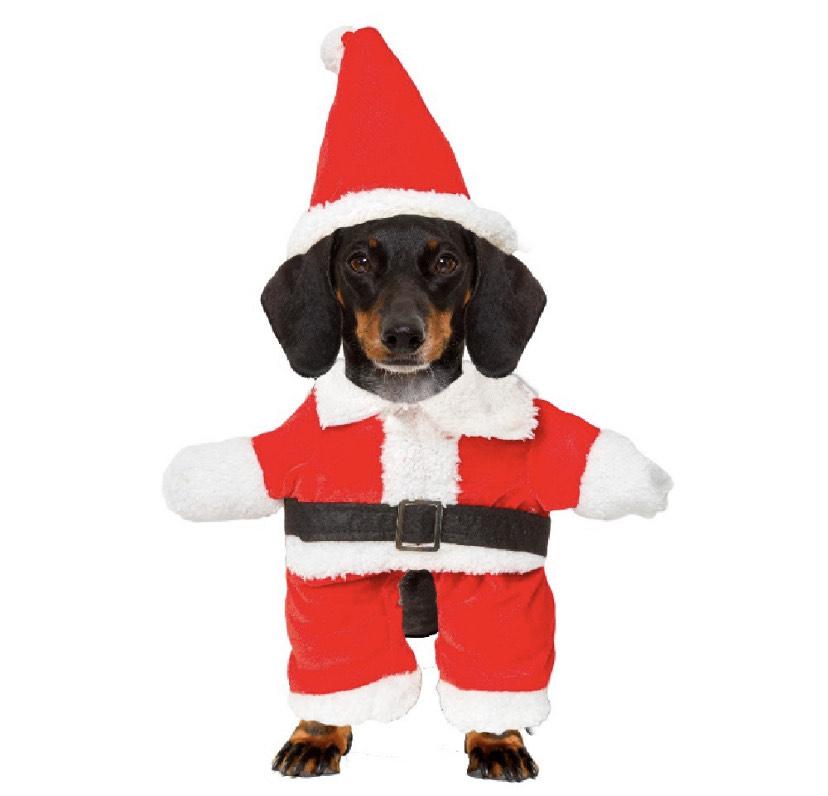 Déguisement de Père Noël pour chien - taille M/L