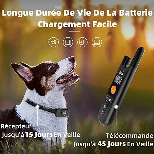 Collier de Dressage pour Chien Dog Care (Vendeur TIers)