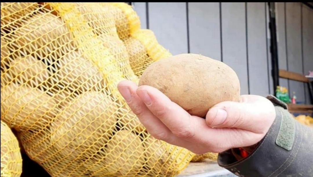 Filet de 15kg de pommes de terres direct producteur - Triel-sur-Seine (78)