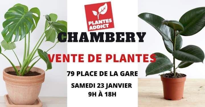 Vente de Plantes à partir de 1€ (Chambéry 73)