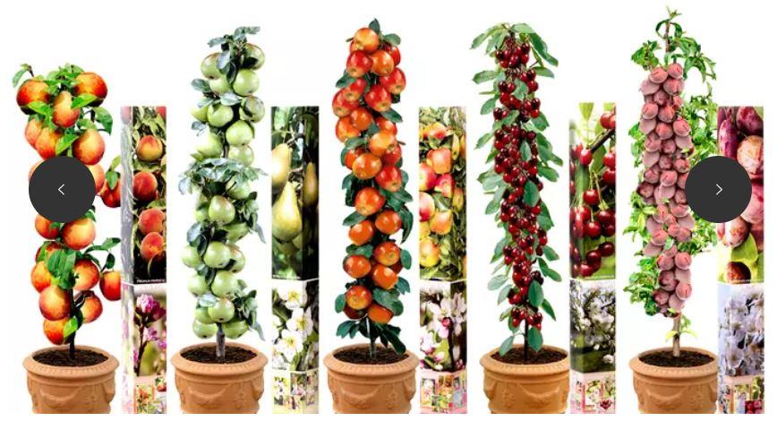 Lot de 5 arbres fruitiers - 90 cm