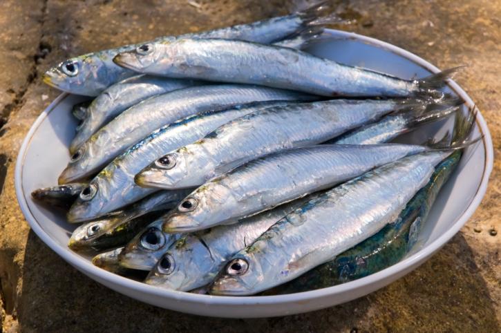 4 Kg de Sardines