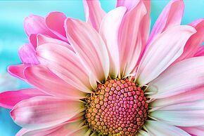 [Habitants de Malville] Distribution gratuite de plants de fleurs - Malville (44)