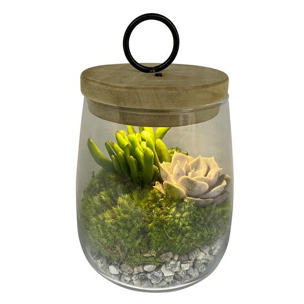 Terrarium 2 plantes avec LED - Ø 15 cm, H22 cm