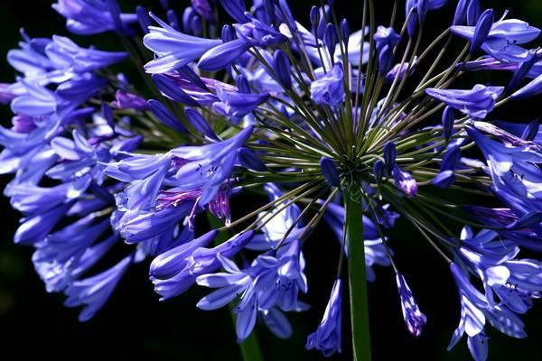 Graines de fleurs gratuites (1 timbre tarif lent par référence de graine demandée)