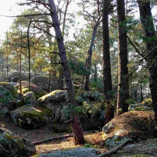 Visite gratuite de la forêt de Fontainebleau avec un guide privé (sur réservation) - Avon (77)