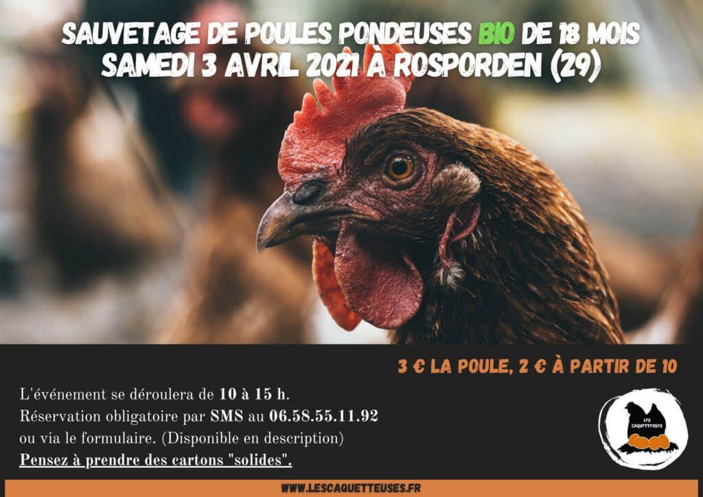 Poules pondeuses bio - Réformées : 18 mois, Rosporden (29)