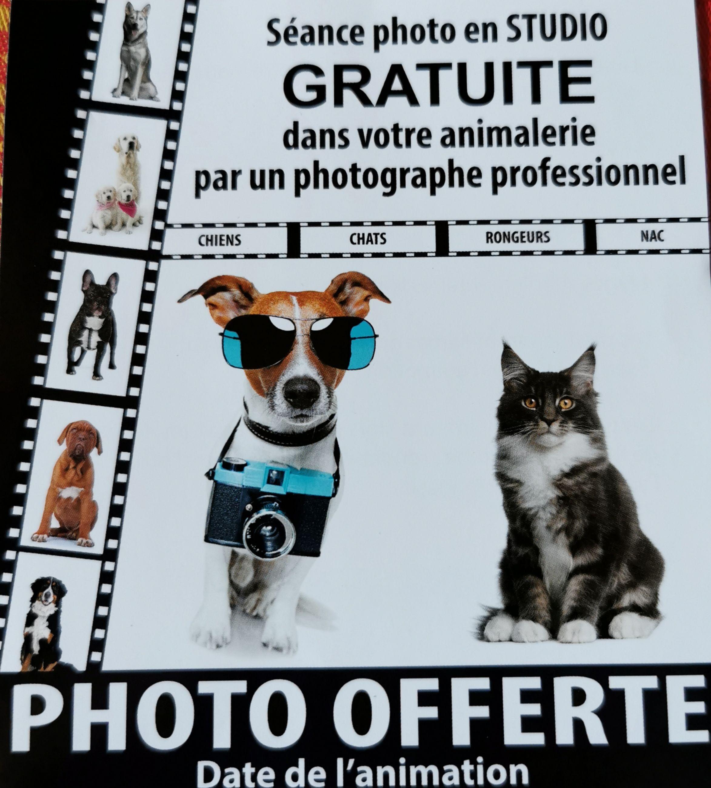 Séance photo gratuite pour vos animaux - Quimperlé (29)