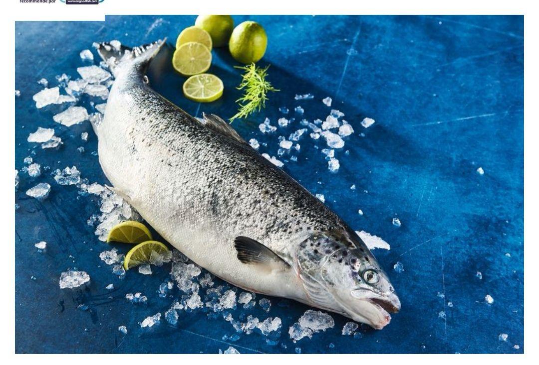 Saumon entier vidé filière responsable origine Écosse - 1 à 4Kg, prix au Kilo