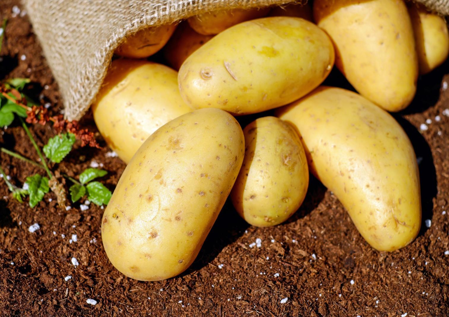 15 Kg de pommes de terre - Évry-Courcouronnes (91)