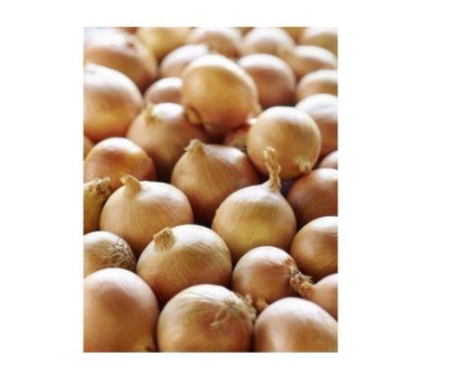 Filet de 5 kg d'oignons jaunes - Catégorie 1, Origine France (5kg)