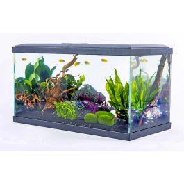 Aquarium Inwa Confort 60 - 60 x 30 x 33,50 cm (Retrait magasin uniquement)