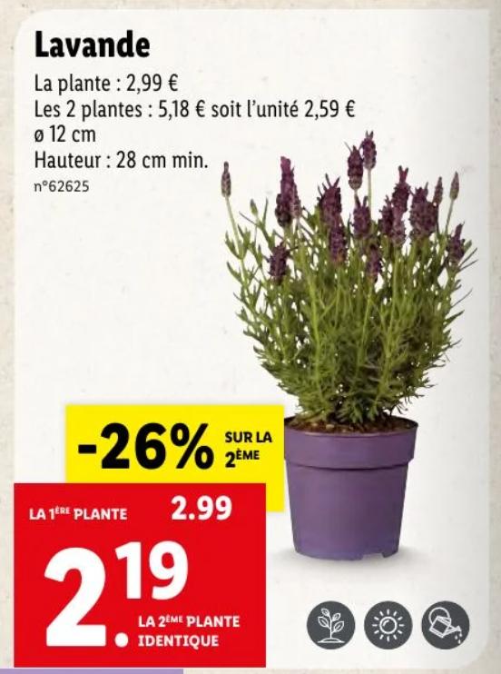 Lot de 2 plantes Lavande - hauteur 28 cm, ø 12 cm