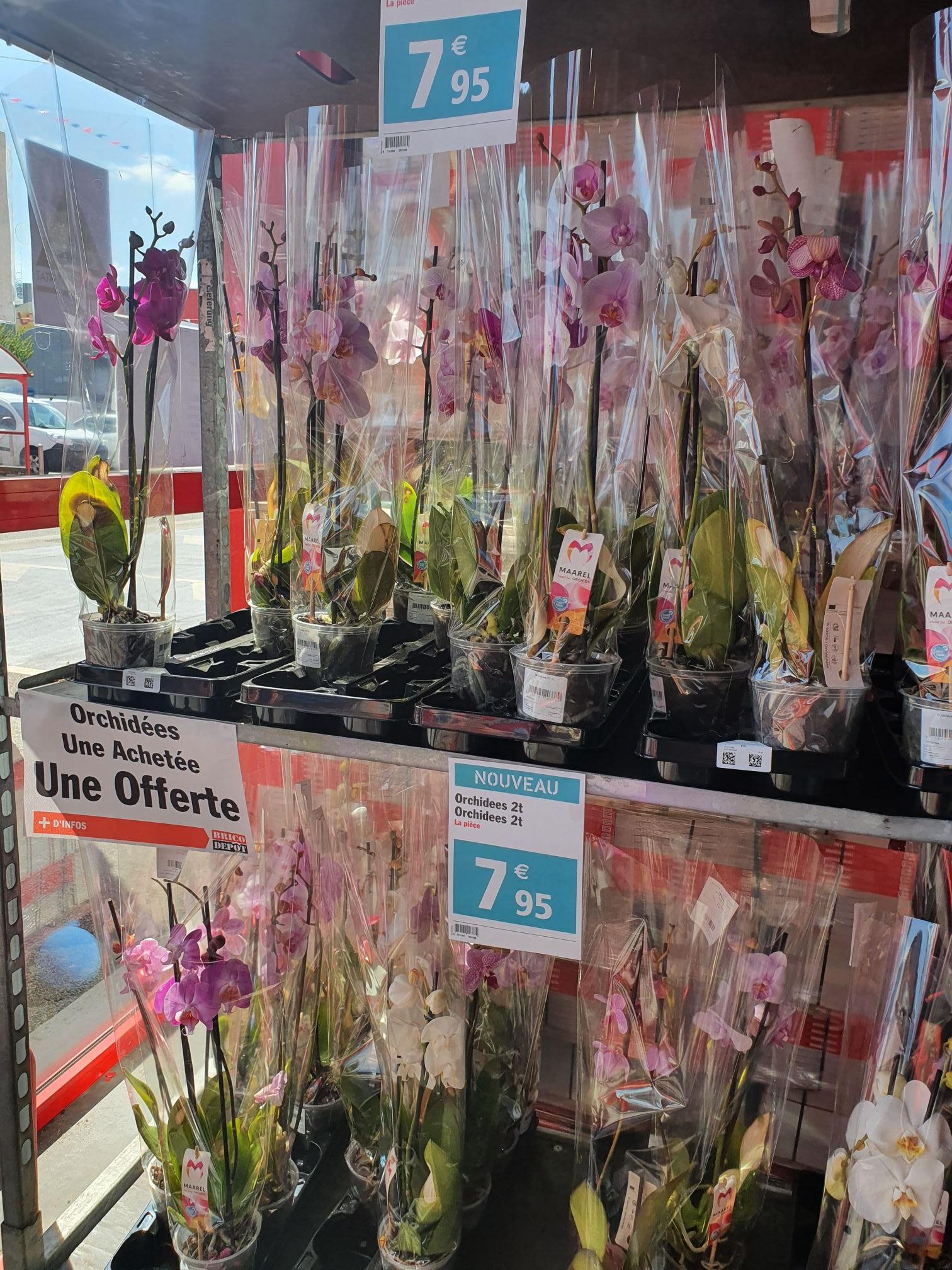1 orchidée achetée = 1 offerte - Brive (19)