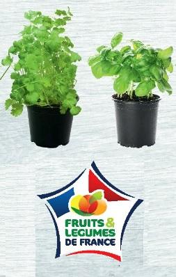 Lot de 2 Herbes Bio aromatiques en pot - Menthe, Coriandre, Basilic, Ciboulette (Origine France)