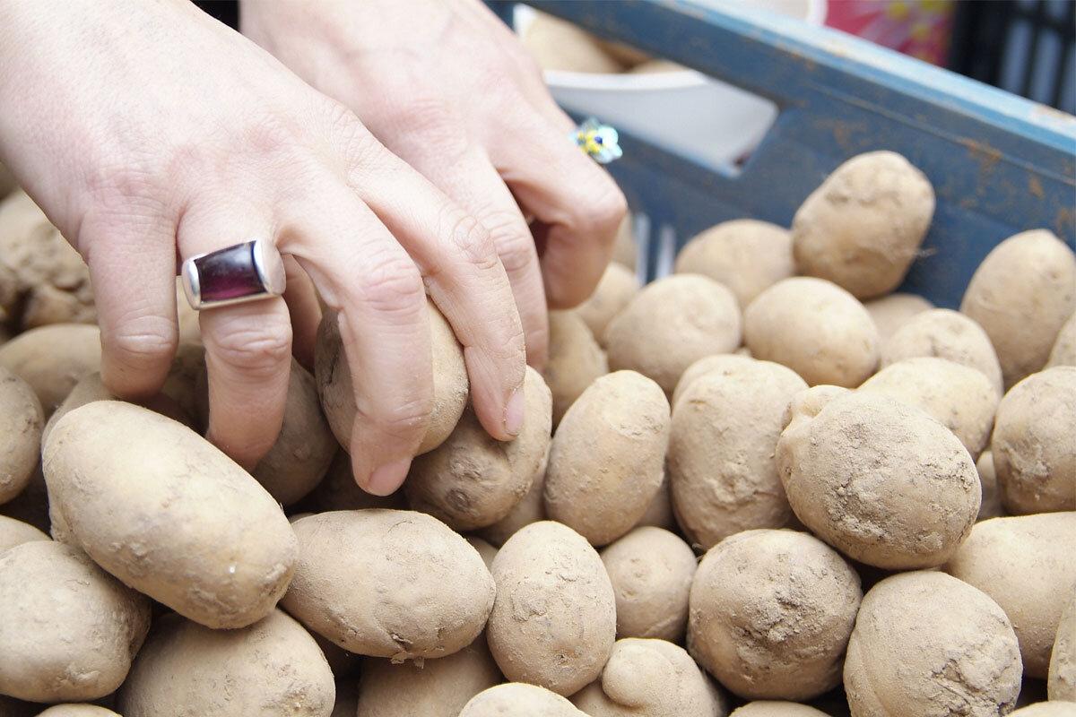 Pommes de terre - 15kg (Gennevilliers 92)