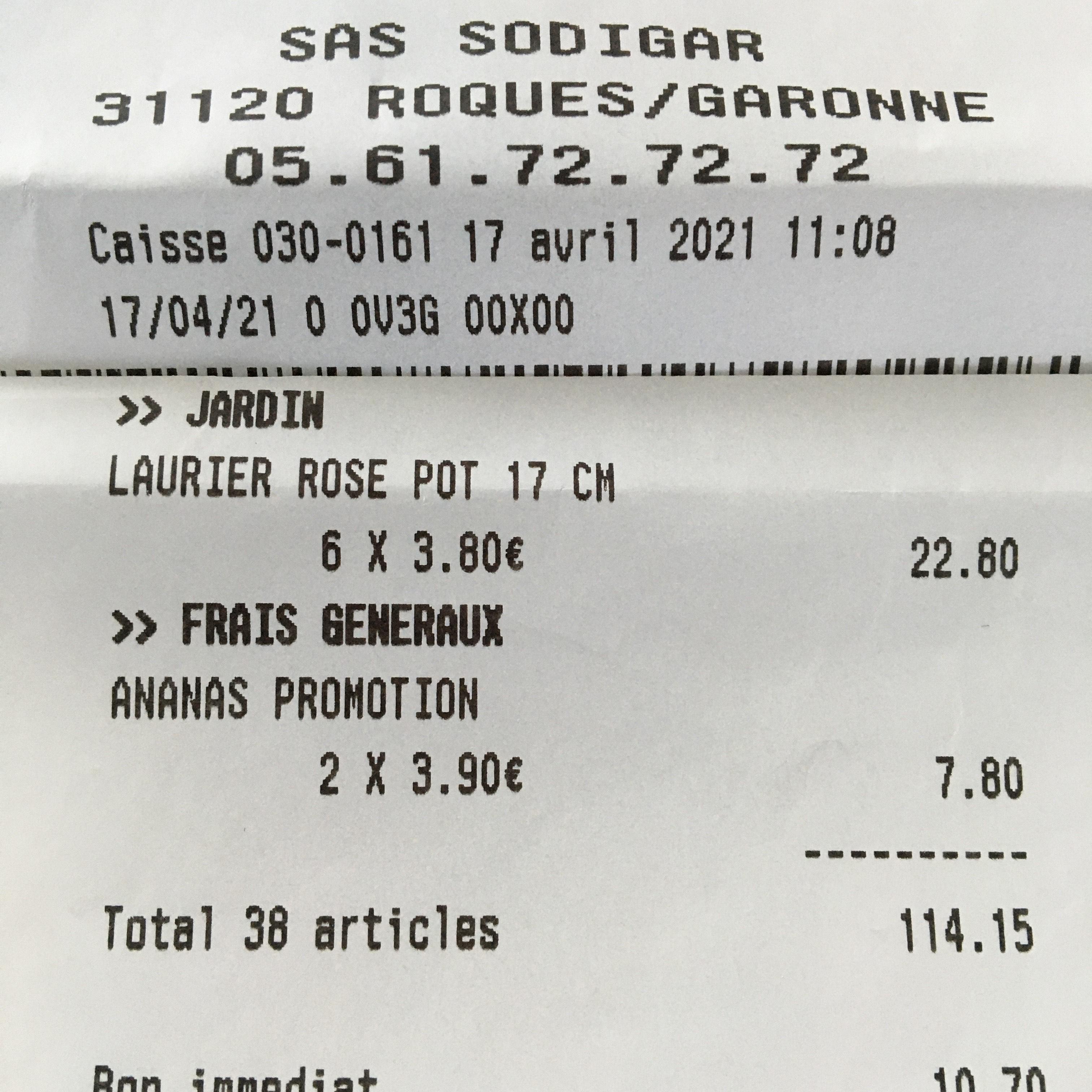 Laurier rose en pot (2.5L) - Roques (31)
