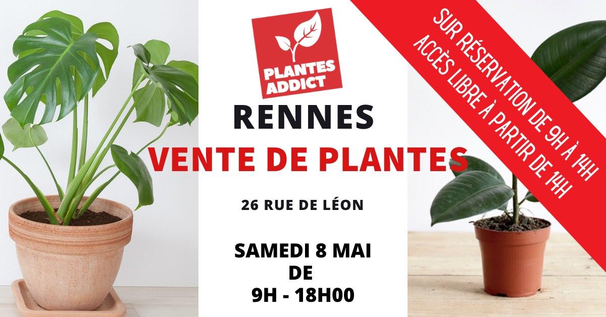 Petites ou moyennes plantes entre 1 et 10€ & Grandes plantes entre 15€ et 40€ - Rennes (35)
