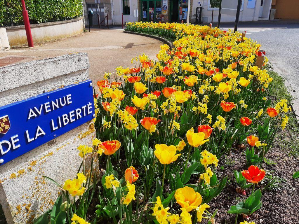 Distribution gratuite de bulbes de printemps à Saint-Georges-lès-Baillargeaux (la Vienne 86)