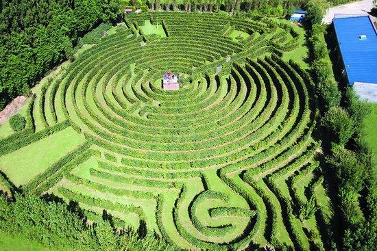 Entrée gratuite au labyrinthe Artmazia - Massy (76)