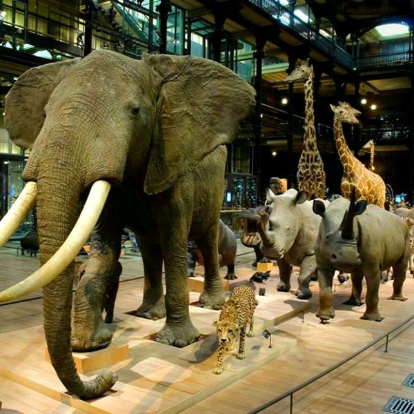 [Moins de 13 & 26 ans] Entrée gratuite au Muséum d'Histoire Naturelle de Paris & dans les Jardins et Réserves Naturelles du réseau du MHN