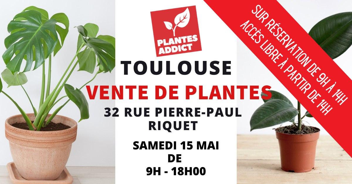 Sélection de plantes en vente à partir de 1€ - Plantes Addict Toulouse (31)