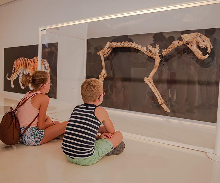 Entrée gratuite au musée préhistorique de l'Aurignacien - Aurignac (31)