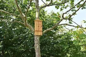 Distribution Gratuite de Gîtes à Chauve-souris et Nichoirs à oiseaux - Langon (33)