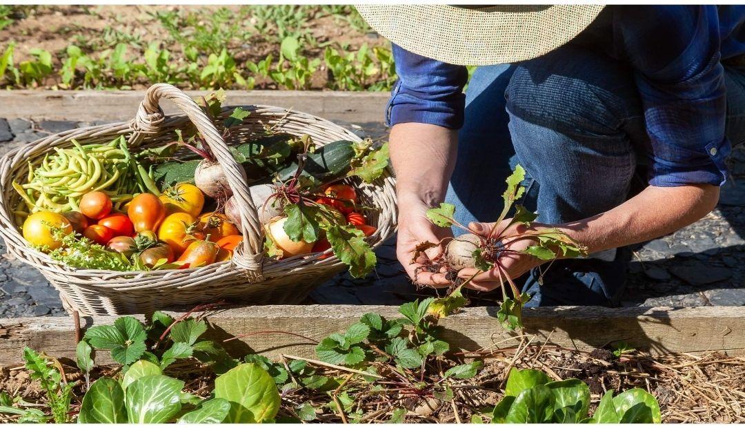 Distribution Gratuite de Graines (Vivaces, Plante à fleurs, Plante aromatique) - Orly (94)