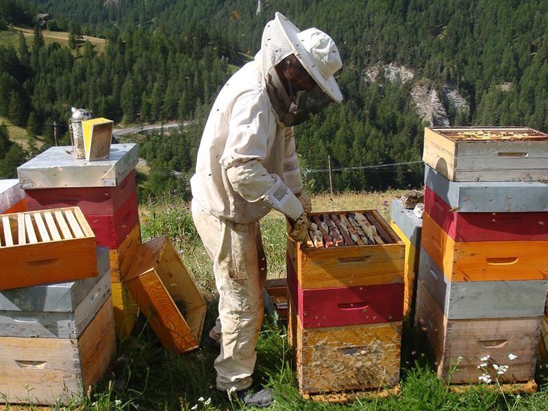 [Journées Nationales de l'Abeille] Sélection d'activités gratuites (ateliers de fabrication de ruchettes, dégustation, extractions, visites)