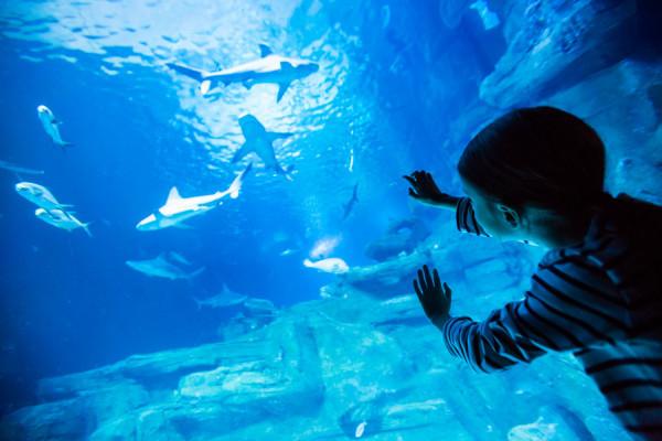 Billet d'entrée à l'Aquarium de Paris (75)