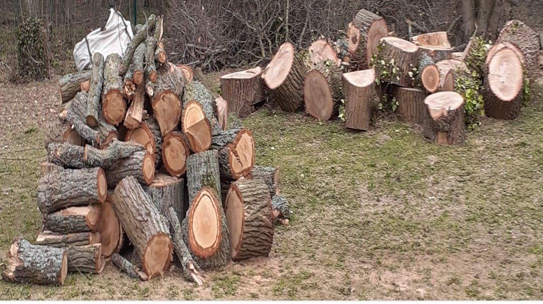 [Habitants] Distribution gratuite de bois - Chaumontel (95)