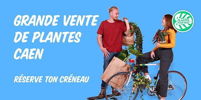 Grande vente de plante d'intérieur/aromates/grande plante/terrarium sur Caen (14)