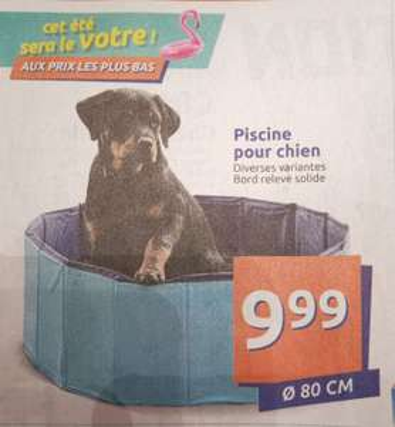 Piscine pour chien (80cm)