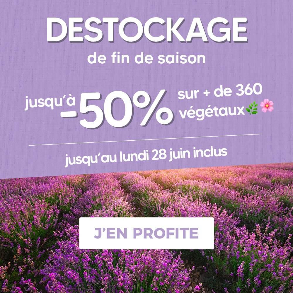Sélection de produits en promotion (pepinieres-naudet.com)